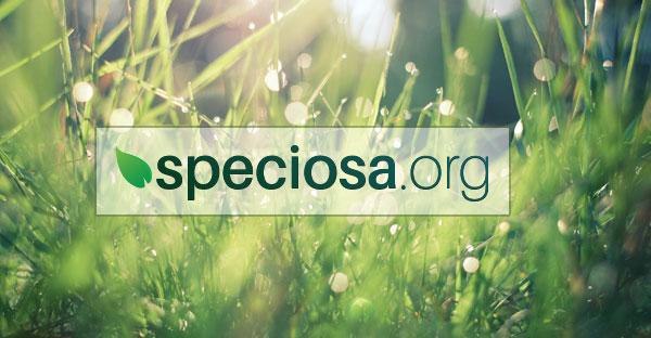 Speciosa.org