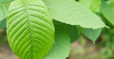 kratom-leaves